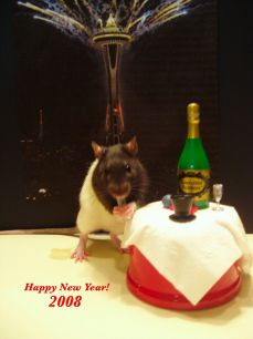 Tally the New Year's Rat